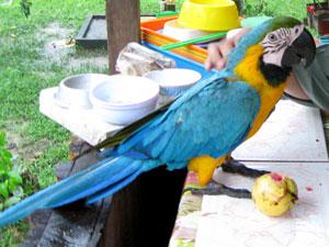blue-yellow-macaw