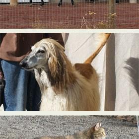 Francis horses dog bob the cat