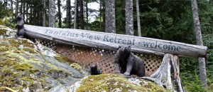 Micro Hydro Powered Off-Grid Mountain Retreat